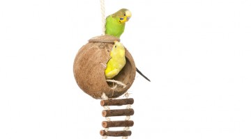 5 Must Have Bird Toys