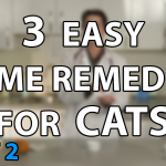 3 Home Remedies for Cats – Short Nail Trimming, Minor Wounds & Itchy Skin for Cats