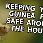 Video: Keeping your Guinea Pigs Safe Around the House