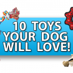 10 Dog Toys Your Pet Will Love!