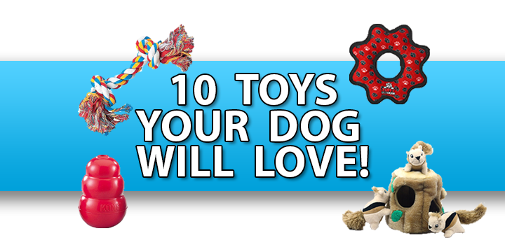 10 toys your dog will love!