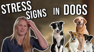 Stress Signals In Your Dog