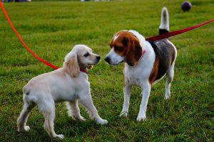 5 Mistakes Dog Owners Make in the Dog Park