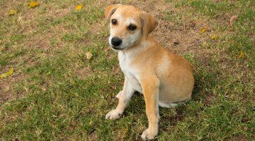 The 5 Basics of Puppy Training
